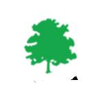 diamond tree accounting icon